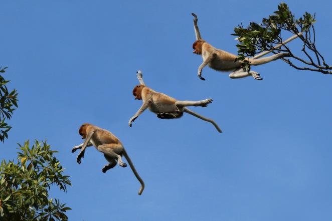 monkey jumping.jpg